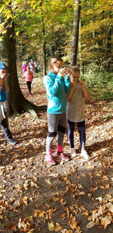 Lesní škola
